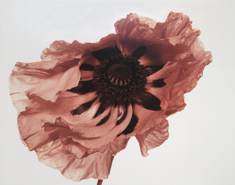 Irving Penn, Poppy: Showgirl, London, 1968, Copyright © by Condé Nast Publications, Inc.