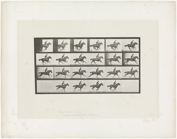 'Gallop; Thoroughbred Bay Horse, Bouquet', Eadweard Muybridge (1834-1904). Collotype 1885-1887. Plate from Animal Locomotion: an Electro-Photographic Investigation of Connective Phases of Animal Movements, Philadelphia 1887. Collection Rijksmuseum