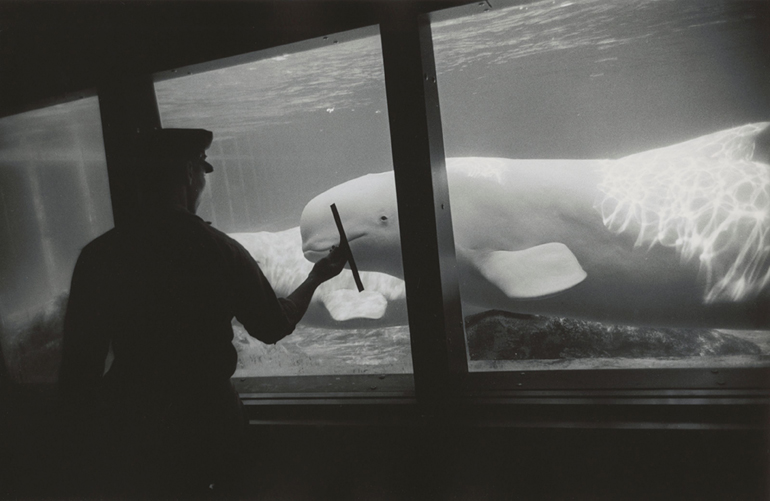 New York Aquarium, Coney Island, New York Winogrand