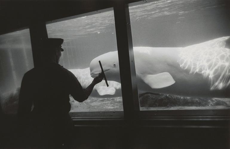 New York Aquarium, Coney Island, New York Winogrand