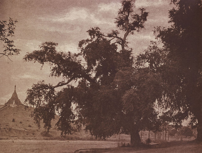 9. Ye-nan-gyoung. Tamarind Tree