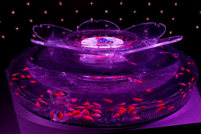 Art Aquarium_Edosakura_Fiori di ciliegio