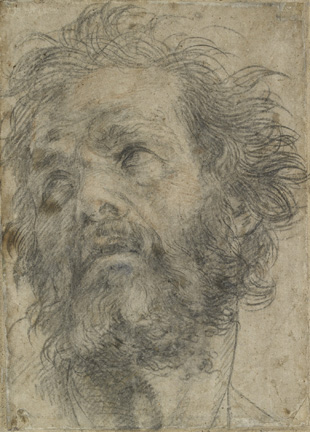 Attributed to Andrea del Sarto (Italian, 1486 - 1530) A Head of a Man, about 1527 Black chalk Unframed: 24.7 x 17.7 cm (9 3/4 x 6 15/16 in.) Framed: 60.4 x 45 x 2.4 cm (23 3/4 x 17 11/16 x 15/16 in.) The Ashmolean Museum, Oxford. Purchased, 1944.