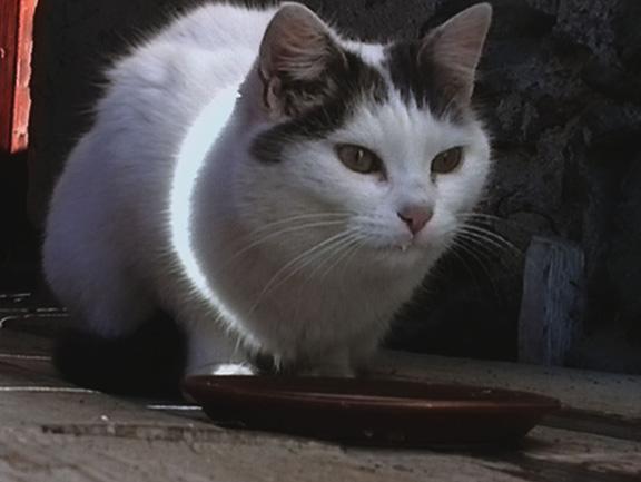 Kitty_TSA