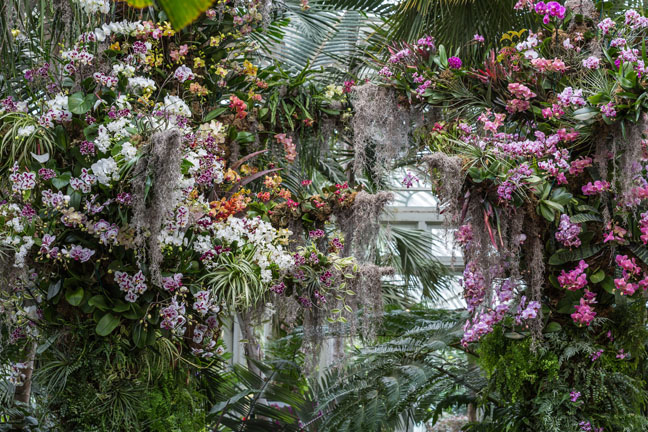 The Orchid Show Orchidelirium At The New York Botanical Garden February 27 April 17 2016