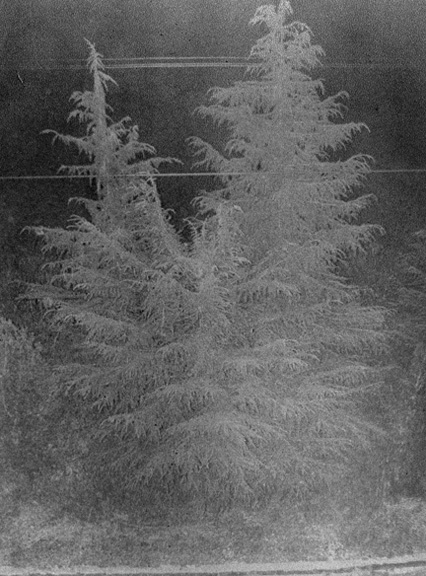 Yokota Daisuke - Untitled (Tree)
