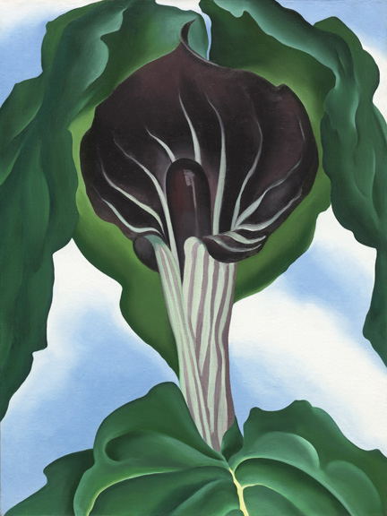 O'Keeffe - Jack in the pulpit no. 3 - NGA