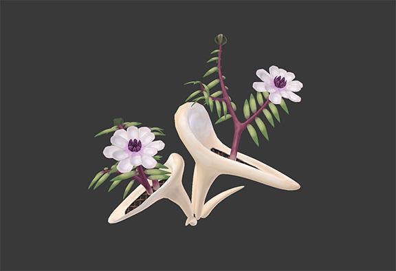 7.Magnolia Gondola